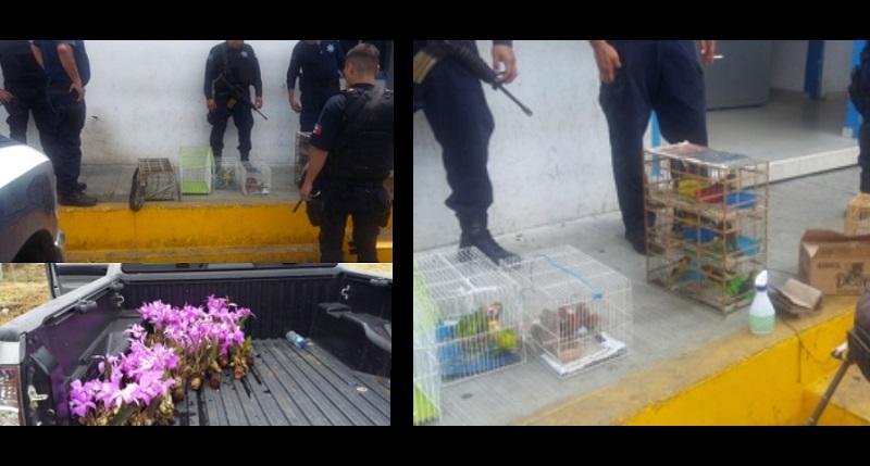 La Procuraduría Federal de Protección al Ambiente (Profepa) informó que durante estas acciones, particularmente en Zamora, fue detenida una persona, de la tercera edad, en el momento que se encontraba en posesión de dos loros corona
