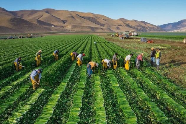 El logro ha sido a través del Programa Trabajadores Agrícolas Temporales México-Canadá (PTAT)
