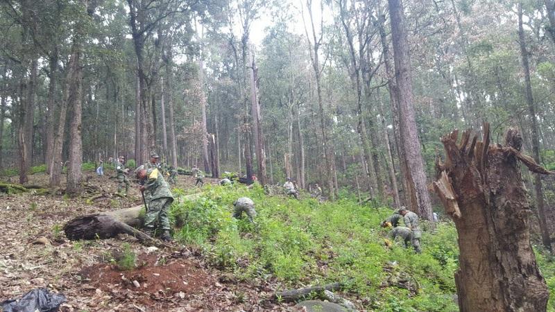 En dicha actividad, se contó con la participación del Ejército Mexicano, la Secretaría de la Defensa Nacional (SEDENA) y de los habitantes de este municipio