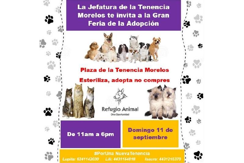 Animalistas independientes han elevado su voz y en varios foros y ferias han promovido la esterilización y la adopción de mascotas, principalmente de perros y gatos rescatados de las calles
