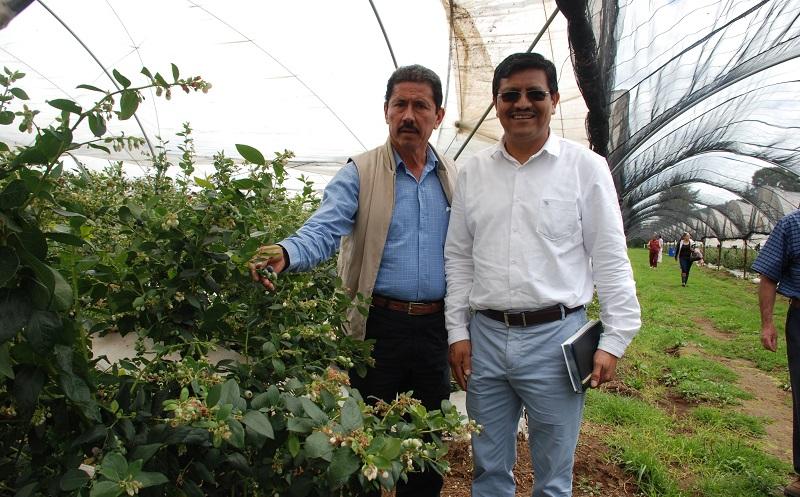 Estos cultivos cuentan con tecnología de punta y generan 350 empleos directos y 650 indirectos; la empresa también produce planta, da asesoría y otorga crédito a productores interesados en el cultivo