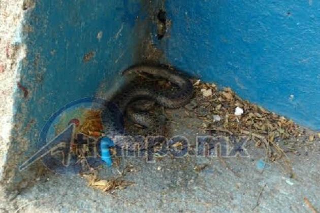 la víbora fue capturada e introducida en una cubeta de plástico, para posteriormente ser enviada al Parque Zoológico de Morelia, que se encuentra a pocos pasos de la secundaria