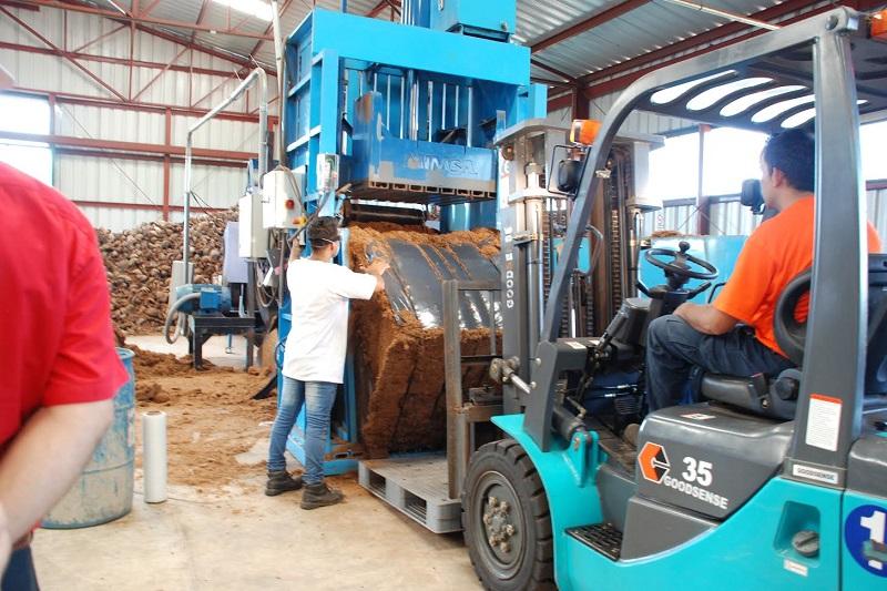 Inicia una nueva etapa de industrialización del fruto, al enviarse los primeros 20 mil cocos certificados, jimados y cepillados: Sedrua