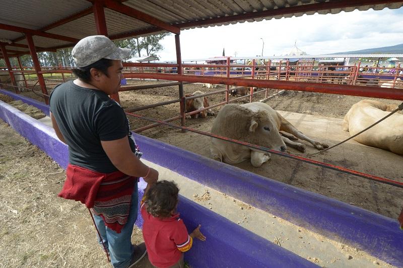 Continúa abierta ventanilla para Programa de mejoramiento genético de la ganadería en Morelia