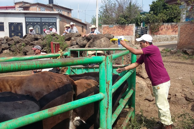 El Ayuntamiento de Morelia  entregará recursos para Mejora Genética del Ganado.