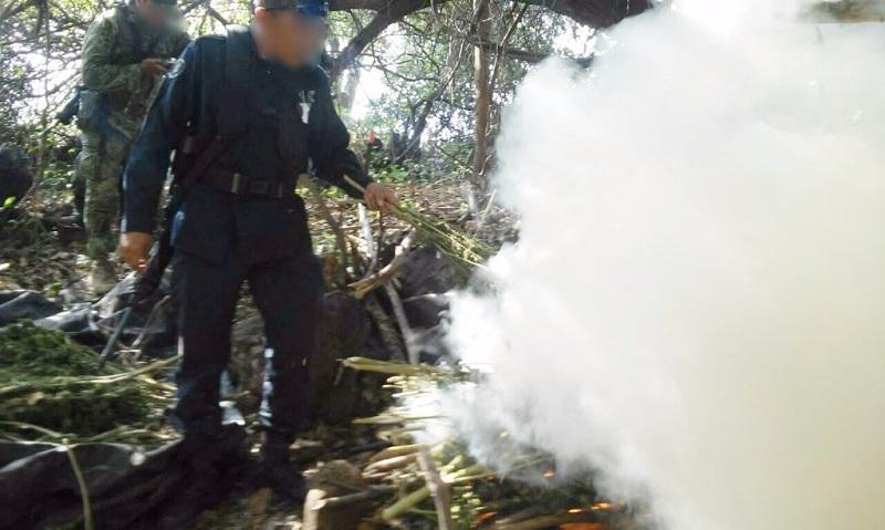 Los agentes procedieron a la incineración del enervante