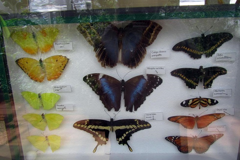 En este espacio nicolaita podrán apreciarse mariposas en vuelo, ciclo de reproducción, anidamiento y alimentación