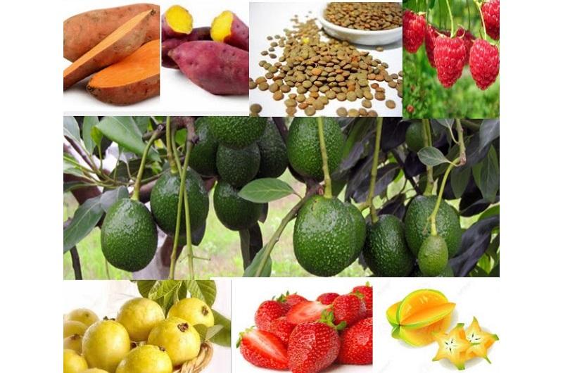 Los productos líderes michoacanos están encabezados desde luego por el aguacate, guayaba, lenteja, fresa, zarzamora, producción de planta de fresa, camote y carambolo, entre otros