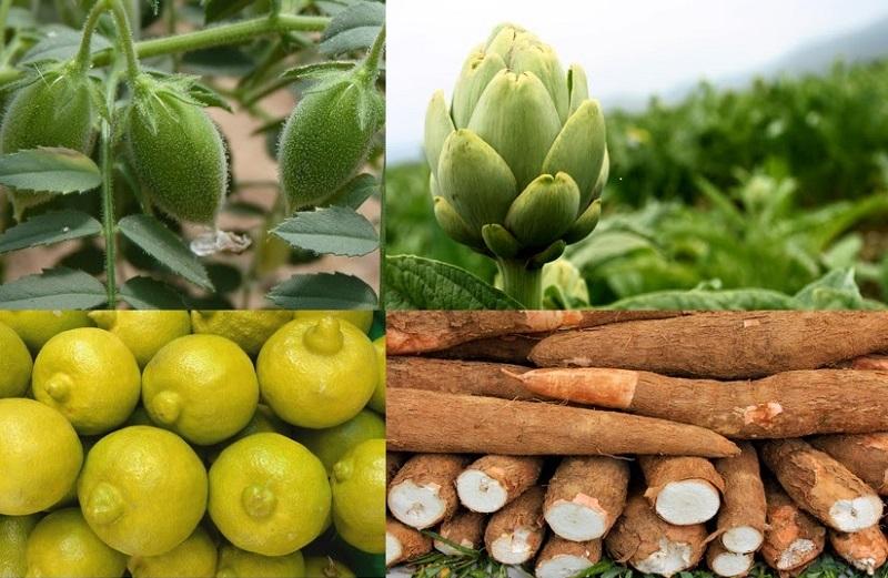 Huergo Maurin destacó por ejemplo que de limón se tiene un registro de acuerdo al Sistema de Información Agroalimentario y Pesquero (SIAP) de 45 mil hectáreas plantas del cítrico con una producción de 670 mil 612 toneladas