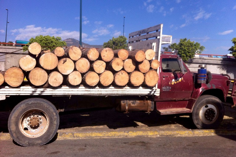 Fue a la altura del paraje conocido como El Conejo donde agentes ministeriales realizaron la inspección de las unidades, que transportaban 12 metros cúbicos de troncos de pino