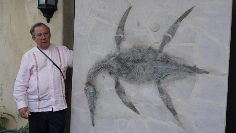 Los plesiosaurios fueron un orden de reptiles marinos contemporáneos de los dinosaurios que se caracterizaron por un cuerpo en forma de barril, con cola corta y cuatro aletas, algunos de los cuales llegaron a medir hasta 15 metros