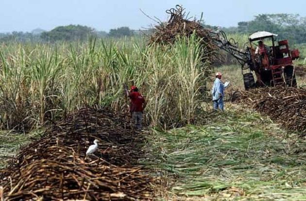 Existen tres ingenios en donde se muele la caña, que son el ingenio Lázaro Cárdenas situado en el municipio de Taretán; el ingenio Santa Clara que se encuentra en el municipio de Tocumbo y el ingenio Pedernales