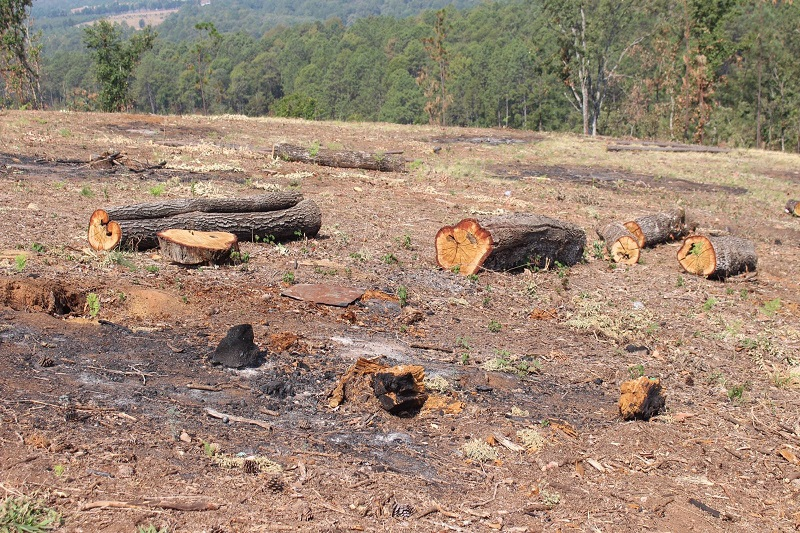 Este día, acatando la Ley Forestal del Estado de Michoacán, las dependencias que integran la Mesa de Seguridad Ambiental realizaron un nuevo operativo en un predio del municipio de Villa Madero, donde se desinstalaron 2 mil 250 plantas de aguacate en 11 hectáreas