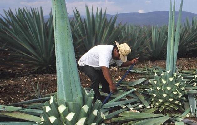 Jaime Rodríguez puntualizó que existen retos importantes para Michoacán relacionados con este sistema producto, para ser competitivo en el mercado nacional y de exportaciones