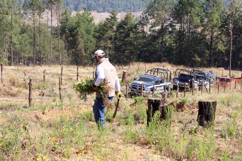 Desde 1986, leyes federales prohíben el cambio de uso de suelo sin autorización previa de la Semarnat