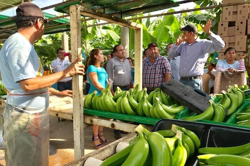 Color Gasca se reunió con productores de guayaba, papaya, plátano, mango, arando y guitarras de exportación en los municipios de Coahuyana, Taretan, Peribán, Los Reyes y Paracho que en conjunto recibieron una inversión del Gobierno de la República cercana a los 9 mdp