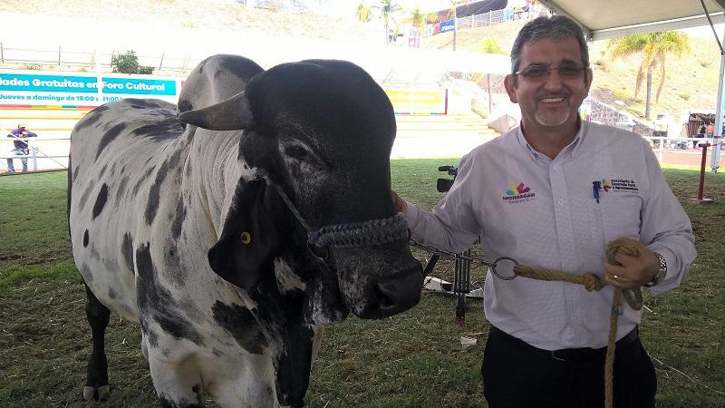 El responsable de la política agropecuaria de la entidad detalló que en la Expo Ganadera enmarcada dentro de la Expo Fiesta Michoacán 2017, las y los ganaderos michoacanos adquirieron 868 sementales y 260 vaquillas