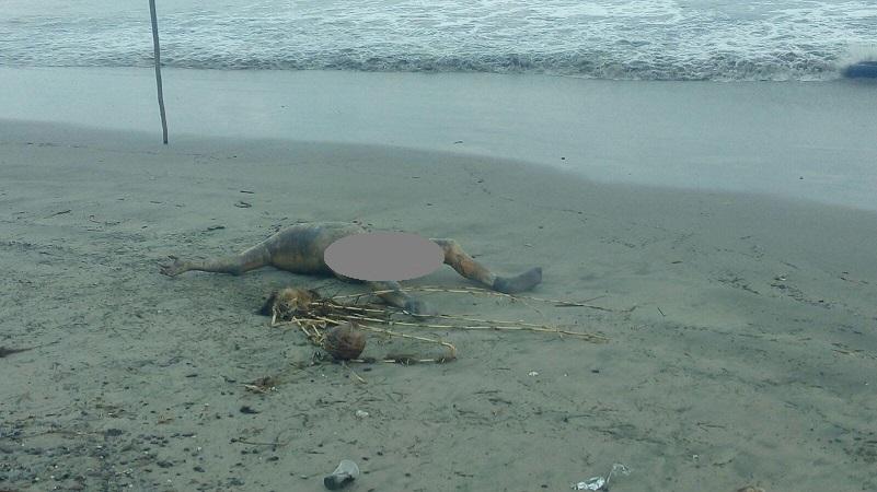 El lunes por la tarde reportaron a las autoridades que flotaba el cuerpo de un hombre en la referida playa, pero fue hasta las 22:45 que el alto oleaje lo sacó  a la orilla del mar