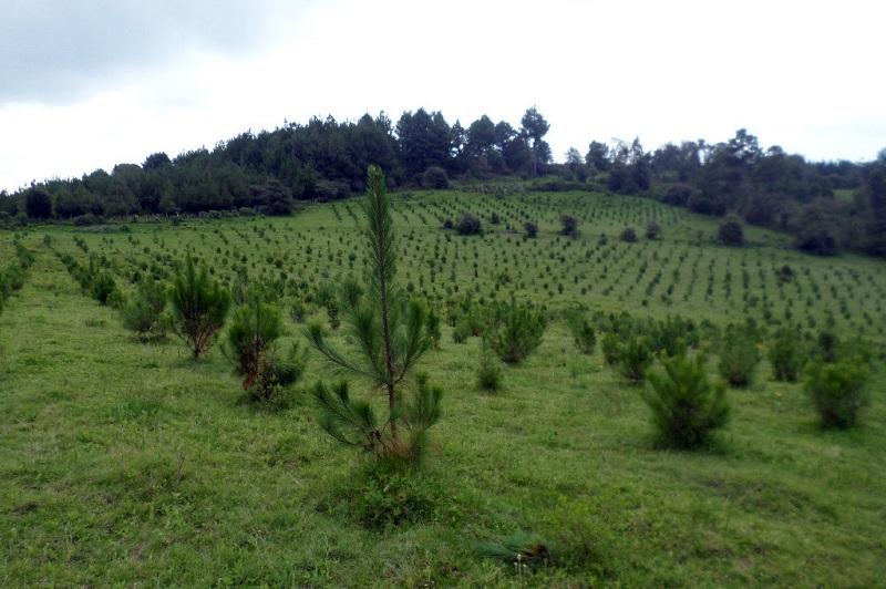 La Reserva de la Mariposa Monarca, la Meseta Purépecha y bosques afectados por incendios forestales y cambio ilegal de uso de suelo, zonas prioritarias