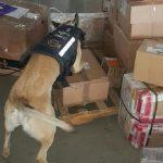En dicho lugar aseguraron con la ayuda de una unidad canina 24 mil 100 pastillas psicotrópicas las cuales tenían la leyenda de Clonazepan y Blíster