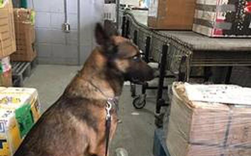 El medicamento fue puesto a disposición del Ministerio Público Federal por efectivos de la Policía Federal, en Uruapan
