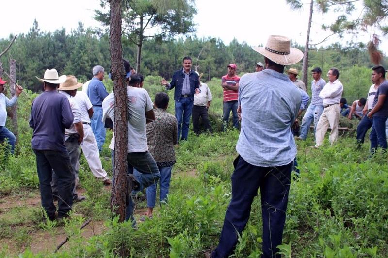 Se comprometieron a no talar más bosques como muestra de disponibilidad para trabajar con el Gobierno del Estado