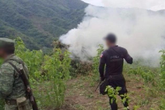 Los uniformados procedieron a la destrucción de 50 kilos de semilla de marihuana que también fue localizada en el mismo predio, tomando conocimiento la autoridad competente