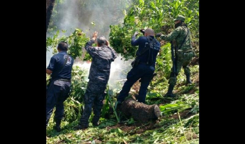 Los operativos coordinados con los tres niveles de gobierno continúan en la zona para inhibir delitos contra la salud