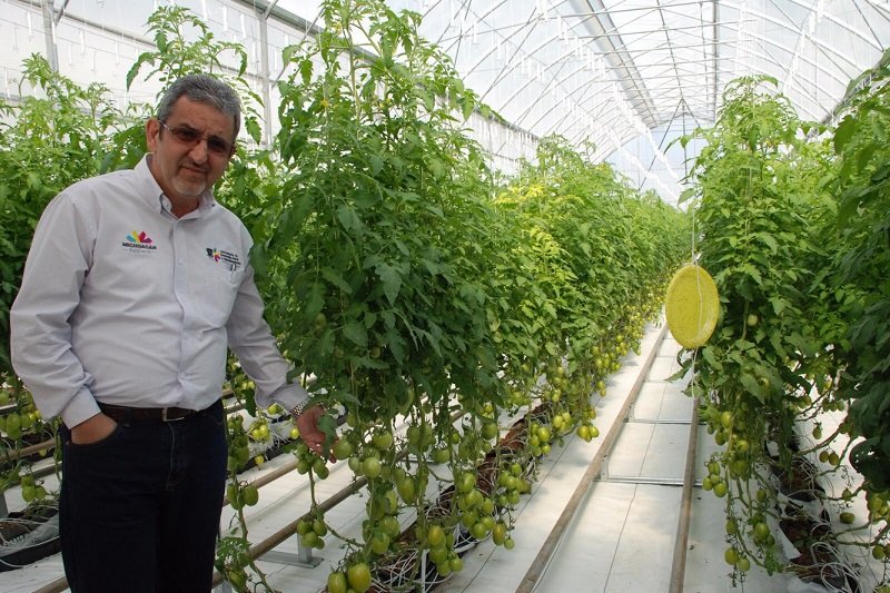 Tanhuato y Yurécuaro, los principales productores del fruto; Aguililla tiene la mayor superficie cultivada, expone Huergo Maurin