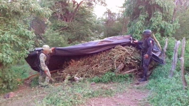 Asimismo, detectaron alrededor de 40 kilogramos de la hierba ya empaquetada para su distribución. La marihuana fue recolectada e incinerada.