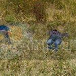 La primera persona ejecutada vestía camisa roja con gris a cuadros, pantalón de mezclilla azul y tenis blancos, mientras la segunda persona vestía playera azul y pantalón de mezclilla. Ambos cuerpos estaban boca abajo
