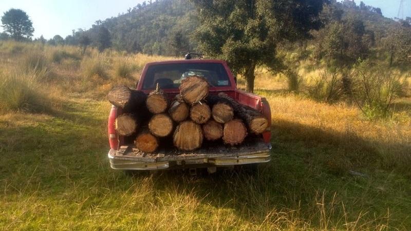 Las personas identificadas como Rogelio C., José S., José M. y Daniel S., junto a los vehículos y troncos de madera, serán puestos a disposición de la autoridad competente