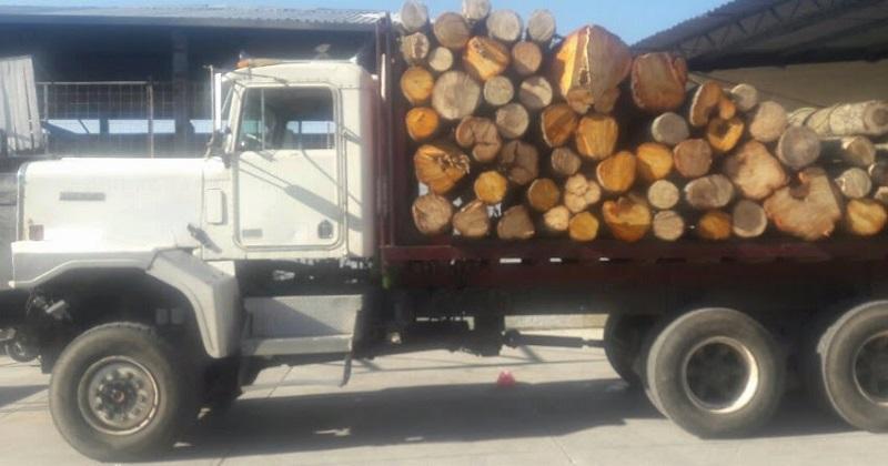 La detención se logró tras una llamada al 911 que alertó sobre la presencia de personas talando madera de manera clandestina en la tenencia Las Palomas, por lo que los uniformados se movilizaron a la zona