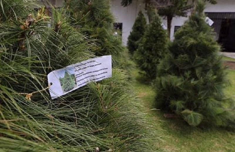 En conferencia de prensa, el titular de la Cofom, Jaime Díaz Vázquez, indicó que el objetivo es apoyar a las y los productores, artesanas y artesanos michoacanos para que tengan un espacio para comercializar árboles de Navidad