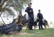La creación de la Unidad Canina data del año 2000, derivada del crecimiento de la zona urbana de la capital michoacana, comentó José Manuel Reyes García, actual médico encargado