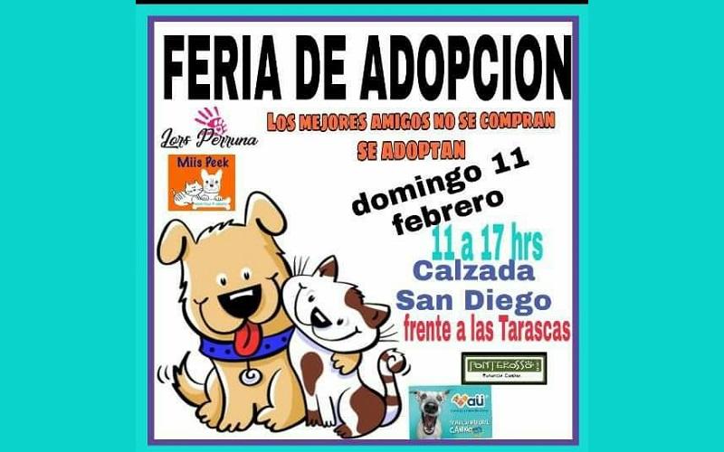 Se realizará el domingo 11 de febrero en la Calzada de San Diego
