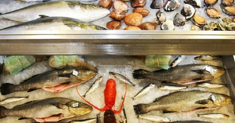Rodríguez López puntualizó que la Tilapia, la Carpa, el Charal, el Bagre y la Trucha representan más del 80% de la totalidad de productos del mar michoacano