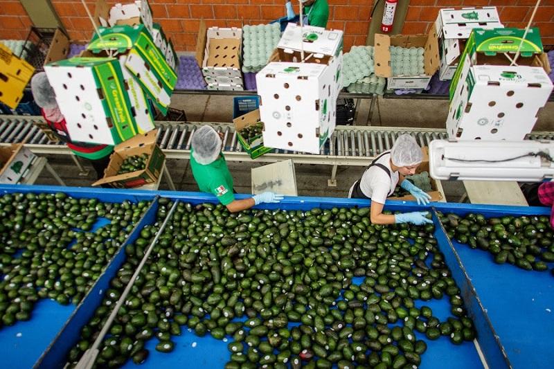 Los principales cultivos fortalecidos por la agroindustria son la guayaba, limón, durazno, entre otros