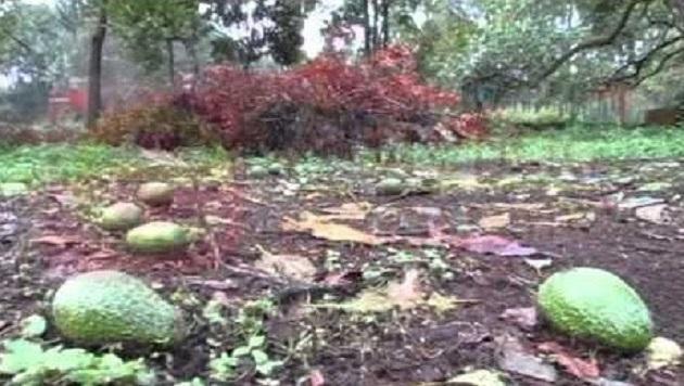Hasta el momento, las lluvias han sido benéficas para el sector agropecuario; sólo hay reportes de daños parciales del 10% en cerca de mil hectáreas