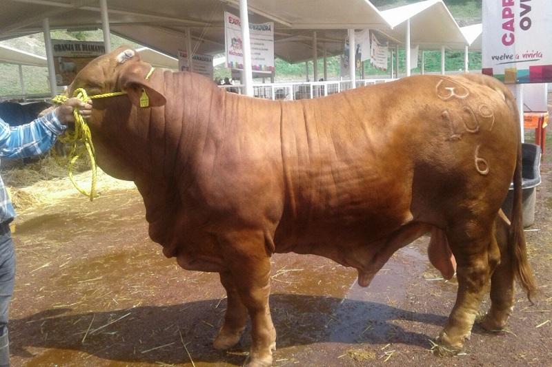 Rubén Medina Niño, titular de la Sedrua, dio a conocer lo anterior, tras resaltar que durante la inauguración de la Expo Feria Ganadera 2018, el jefe del Ejecutivo, anunció que el gobierno de Michoacán aportaría 10 mil pesos adicionales