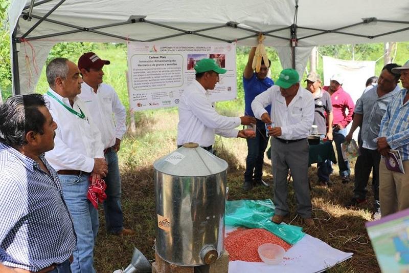 La asesoría a grupos organizados a través del extensionismo rural se trabaja en la entidad de manera coordinada con la Secretaría de Agricultura, Ganadería, Desarrollo Rural, Pesca y Alimentación