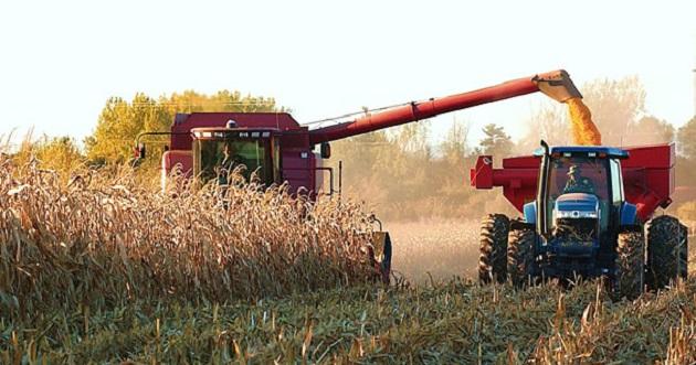 El incremento en cultivos elegibles como maíz, trigo, arroz, sorgo, entre otros, van desde un 20 hasta un 27%