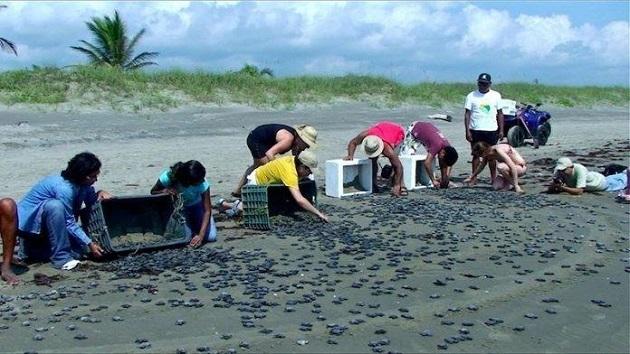 La contaminación por plástico está costando a nuestros océanos la vida de un millón de aves marinas y de 100 millones de mamíferos marinos al año