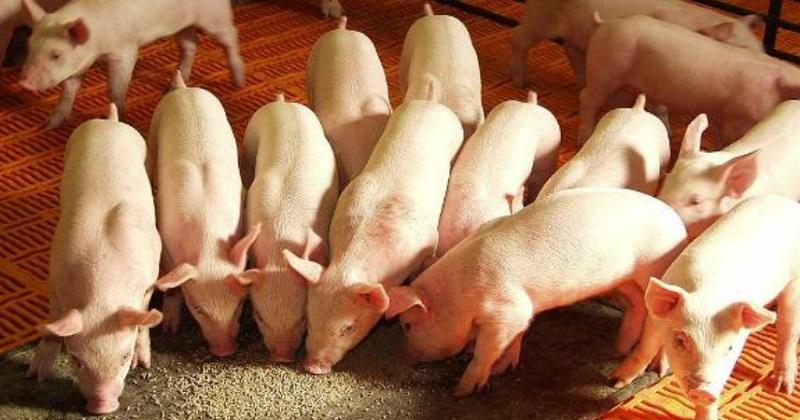 El precio medio rural por kilogramo de carne en el estado es de 26.8 pesos para ganado de pie y de 42.64 pesos en carne en canal