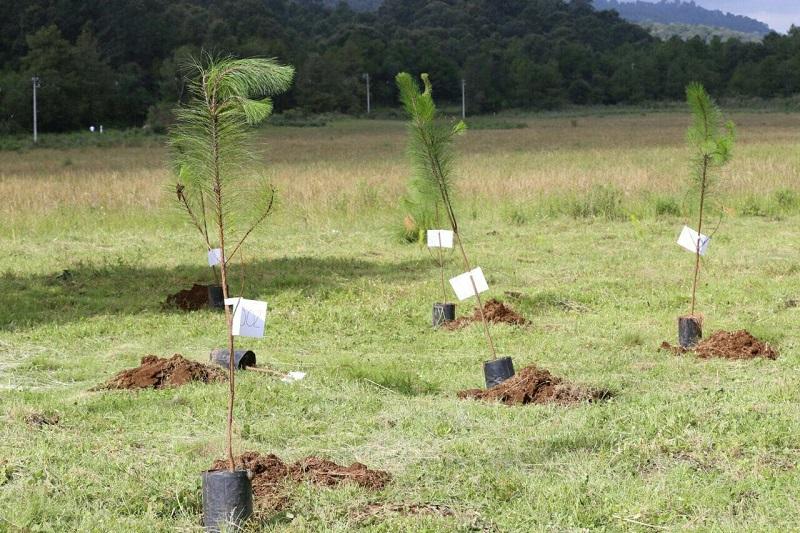 Esta jornada forma parte del compromiso del Gobierno del Estado por atender de manera transversal y coordinada las acciones en materia de restauración de suelos