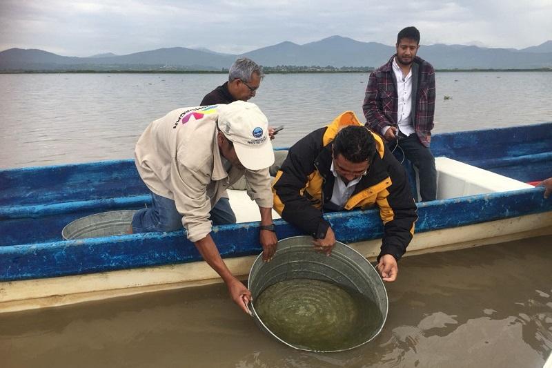 Abundó que estas acciones se realizan para la preservación del pez blanco en el lago de Pátzcuaro, ello enmarcado dentro del componente de Conservación de Especies Nativas