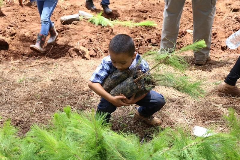 La Mesa de Seguridad Ambiental va a sesionar continuamente para establecer las cooperativas y logísticas para atacar el trasiego de madera ilegal; asevera el titular de la ProAm, Juan Carlos Vega