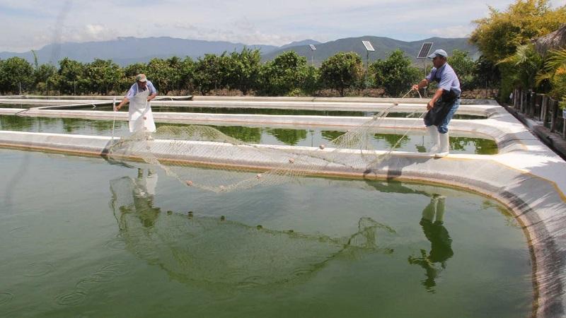 Vargas Medina destacó que en la entidad se producen 31 especies pesqueras destacando de manera importante la tilapia, bagre, carpa, rana, trucha, entre otros