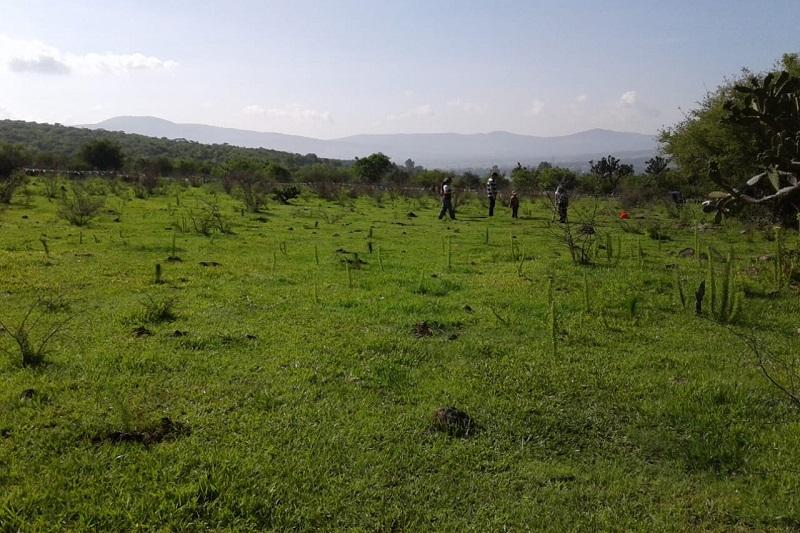 Cabe precisar que estas acciones de Imagen Urbana, son adicionales a las que lleva a cabo la Dirección de Medio Ambiente y Sustentabilidad que tiene la meta de plantar, coordinada con dependencias estatales y federales, 96 mil árboles este año