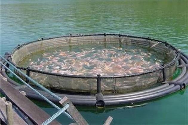 El estado es el segundo productor de pescado a nivel nacional bajo la modalidad de acuacultura, con más de 800 granjas de tilapia, trucha, bagre, rana, charal y carpa, informa el director Julio Vargas Medina.